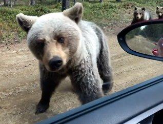 Traff på bjørn i Finnmark