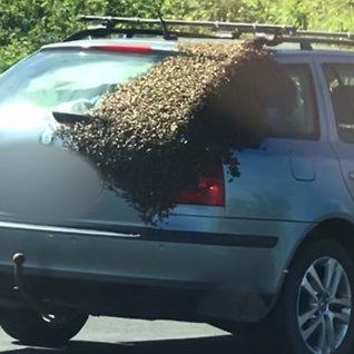 - Hva er det han har i bilen sin?