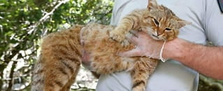 Ny katte-art kan være oppdaget