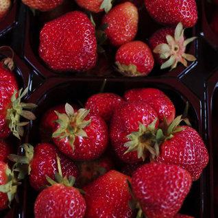 Så mye kosternorske jordbær