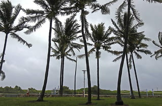Florida-palmer under angrep