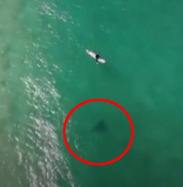 Haien nærmer seg - se dronens advarsel