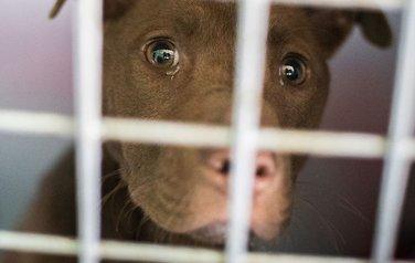 Hundedøden:Utelukker ikkemiljøforhold